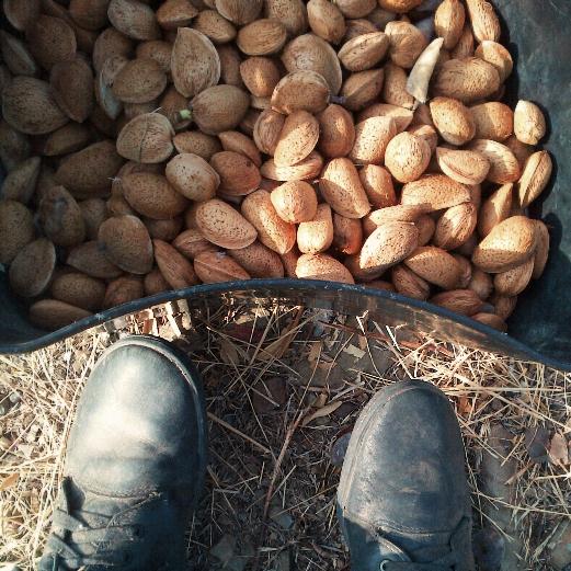 Raw Almonds from Joss