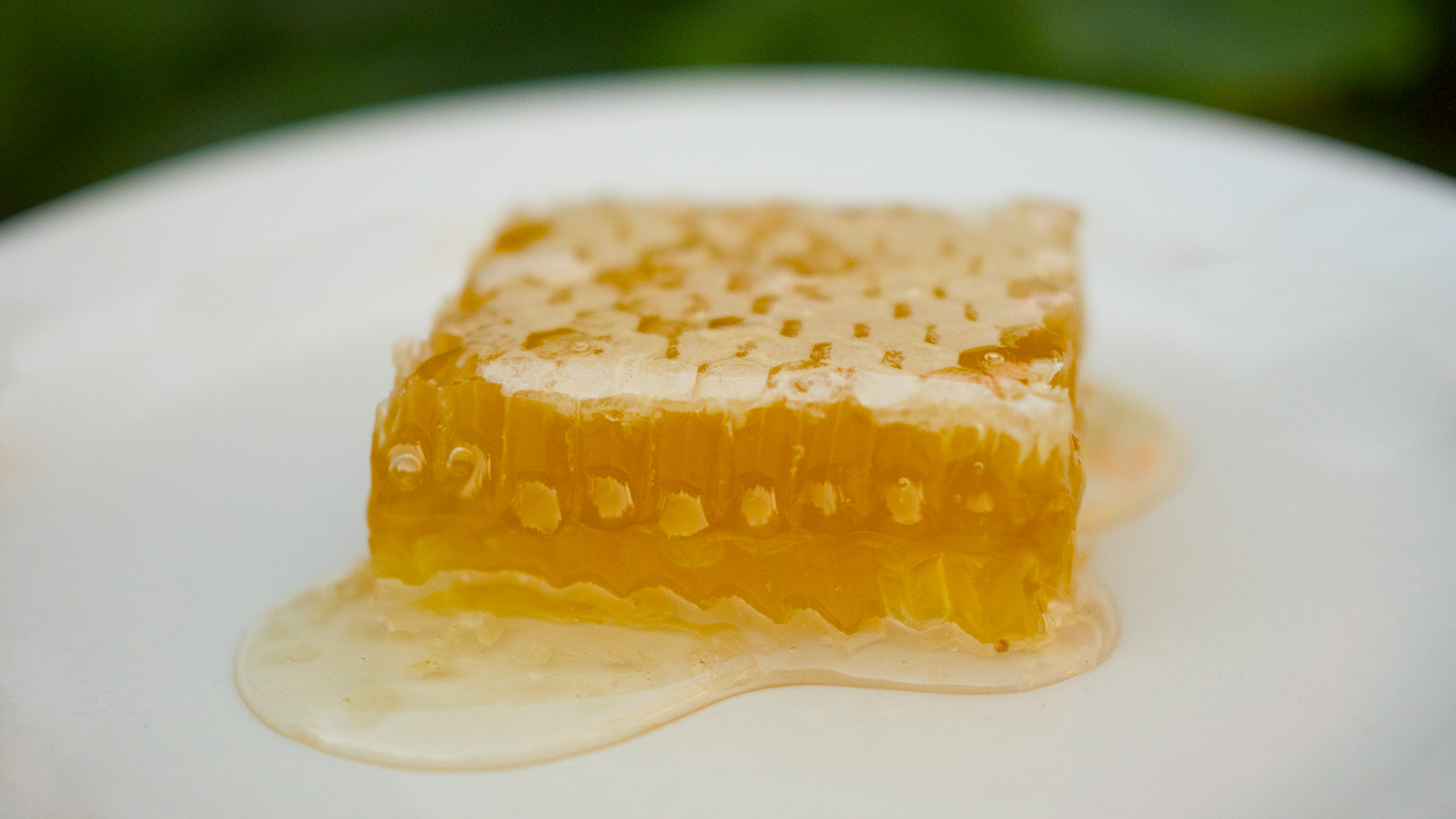 honey comb on a plate