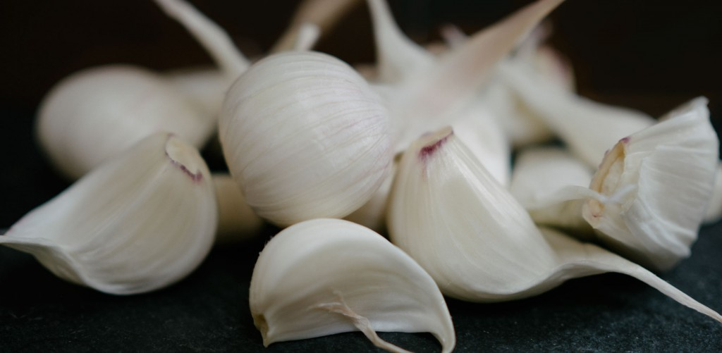 porcelin garlic