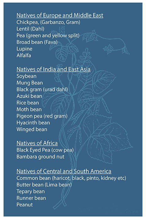 Table of popular pulses and their origins